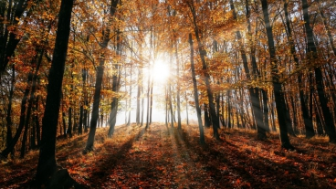 Sun filtering through a forest canopy during autumn
